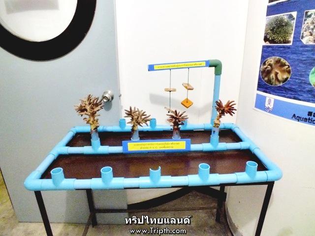 ส่วนจัดแสดงการปลูกปะการัง
