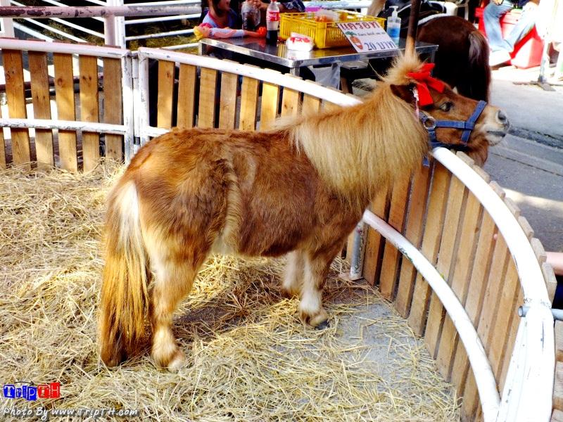 ม้าแคระผูกโบว์ด้วย 55+