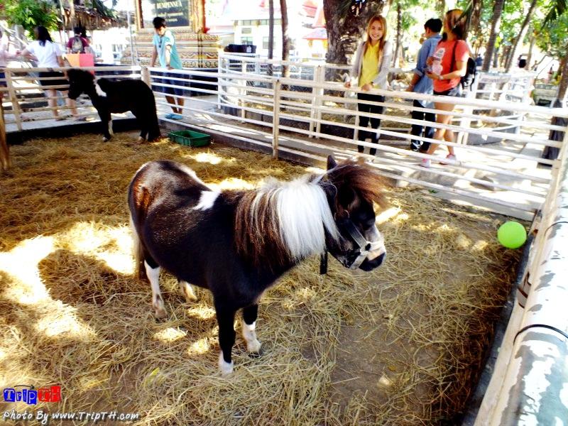 ม้าแคระ