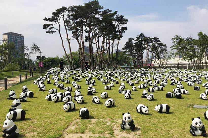 หมีแพนด้า 1600 ตัว