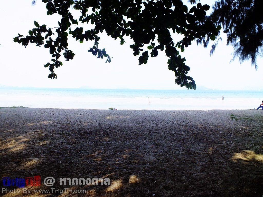 ชายหาด ร่มรื่น (3)