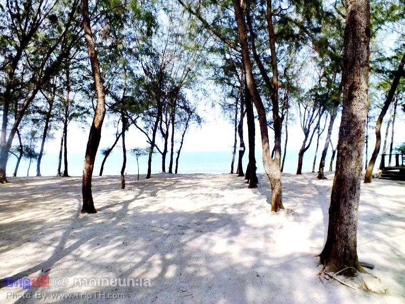 หาดเทียนทะเล สัตหีบ (1)