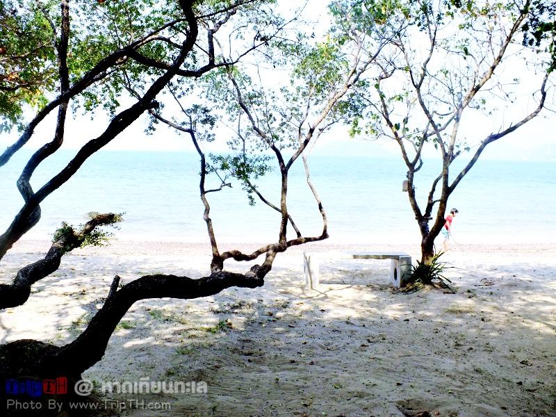 หาดเทียนทะเล สัตหีบ (4)