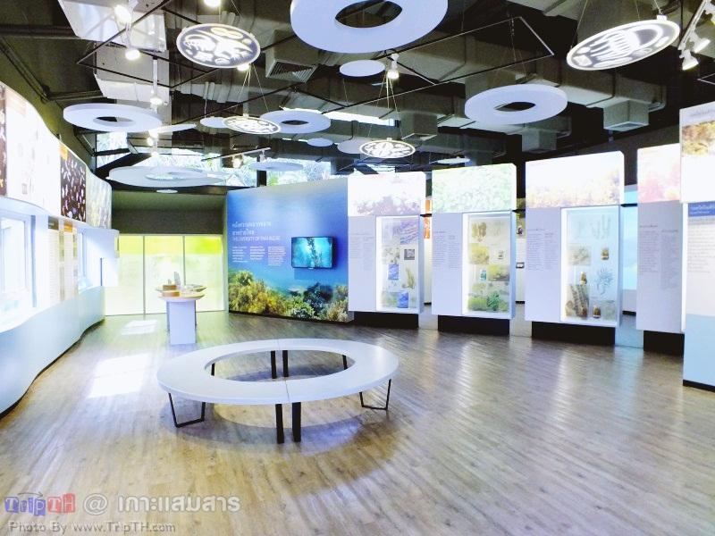 พิพิธภัณฑ์ธรรมชาติวิทยาเกาะและทะเลไทย (4)