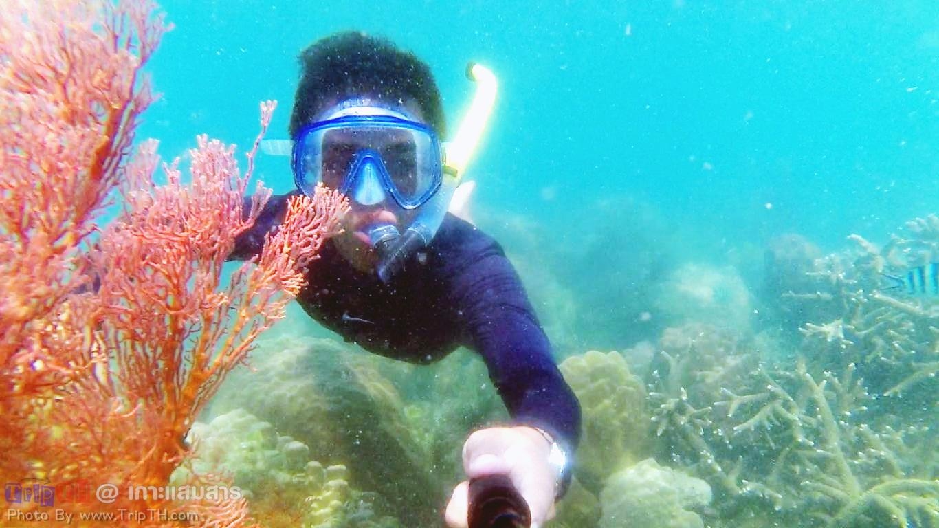 ดำน้ำเกาะแสมสาร (2)
