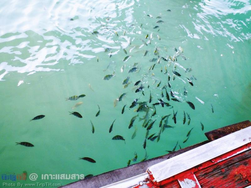 ปลาเยอะมาก