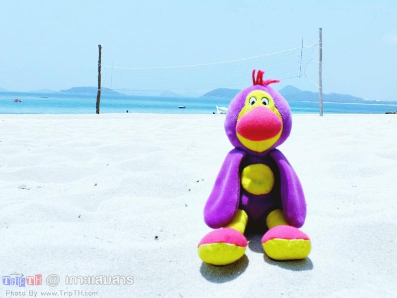 พาลูกน้อง มาเที่ยวทะเล (2)