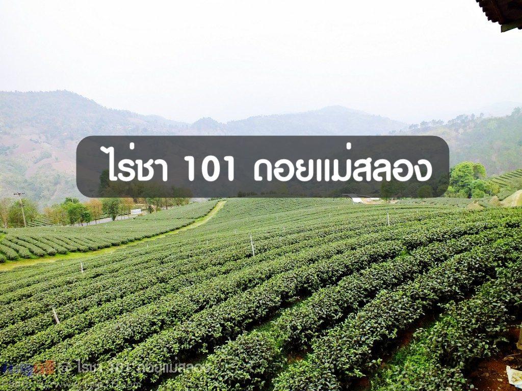 ไร่ช่า 101 ดอยแม่สลอง (1)