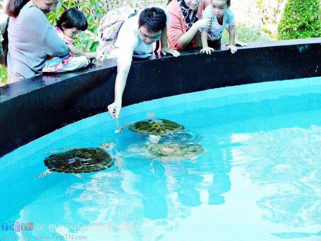 บ่อเต่า (2)