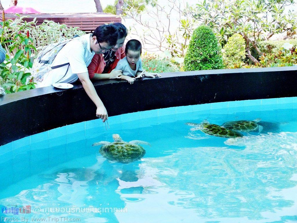บ่อเต่า (3)