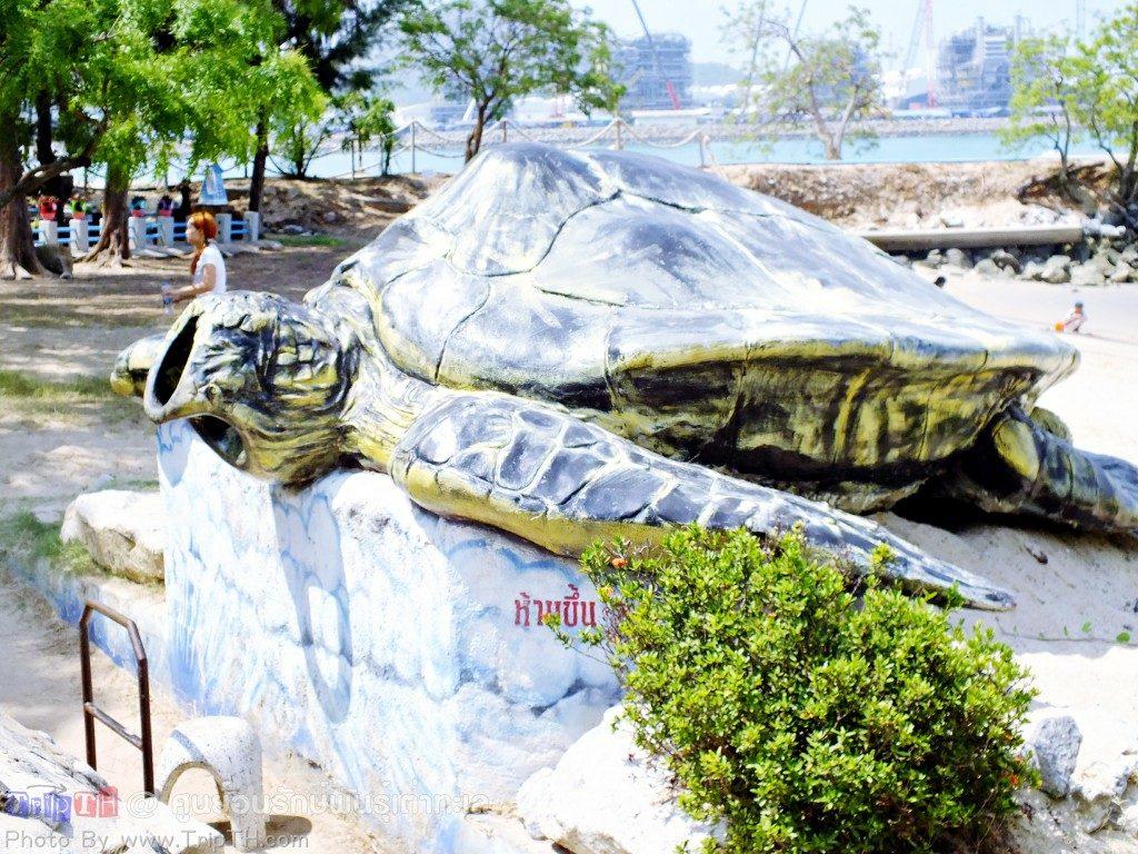 ศูนย์อนุรักษ์พันธุ์เต่าทะเล ทร (2)