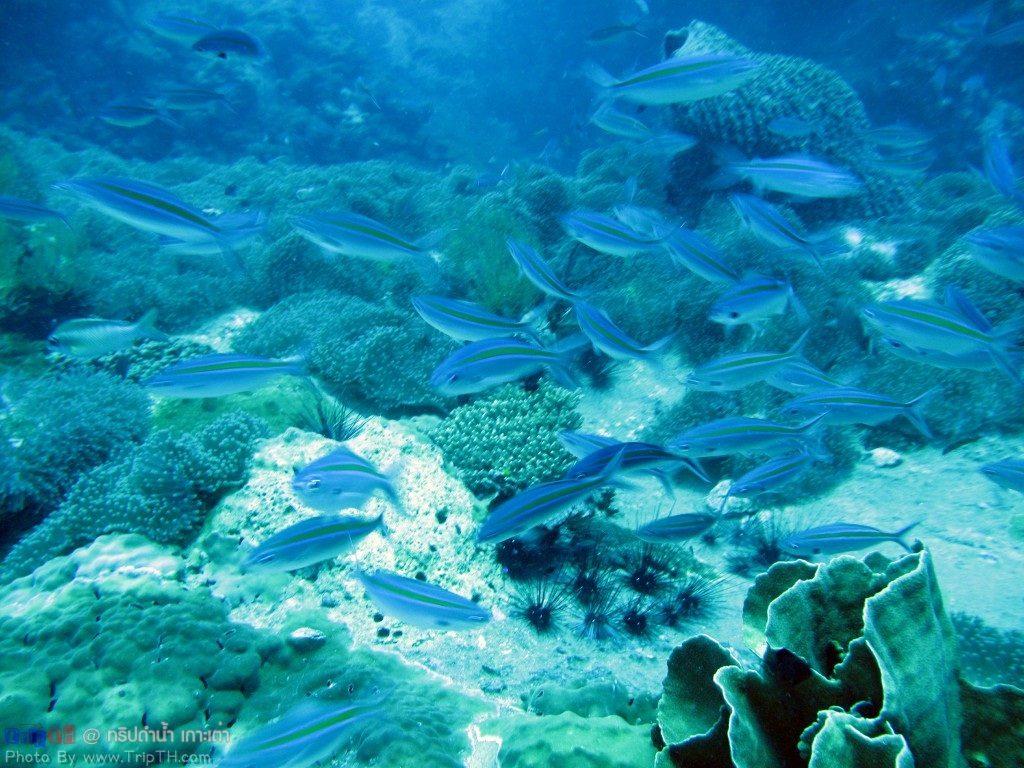 ความสวยงามของโลกใต้ทะเล @ เกาะเต่า (3)