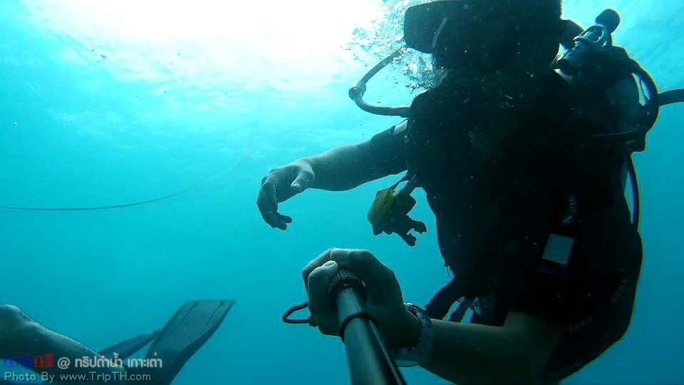 จุดดำน้ำ อ่าวลึก เกาะเต่า (5)