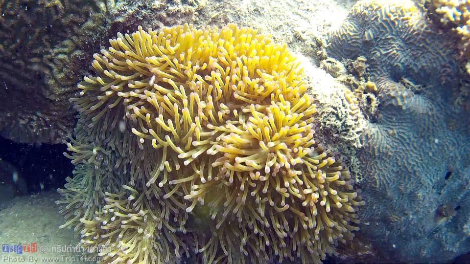 ดำน้ำอ่าวหินงาม เกาะเต่า (3)