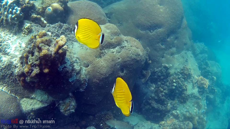 ดำน้ำอ่าวหินงาม เกาะเต่า (4)