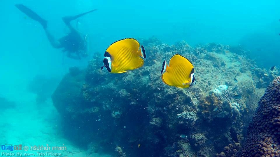 ดำน้ำอ่าวหินงาม เกาะเต่า (5)