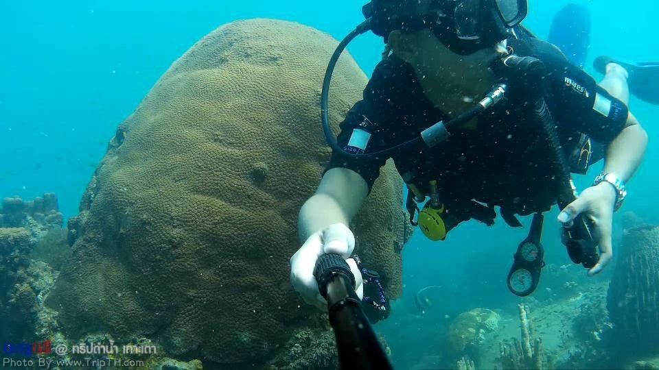 ทริปดำน้ำ เกาะเต่า (2)