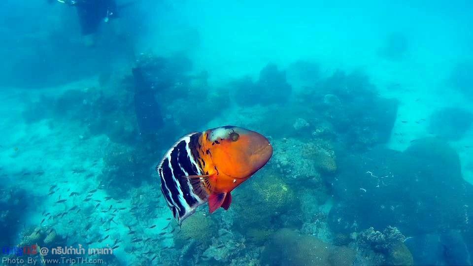 ทริปดำน้ำ เกาะเต่า (4)