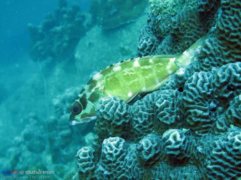 ปลาเยอะมาก @ จุดดำน้ำอ่าวลึก เกาะเต่า (2)
