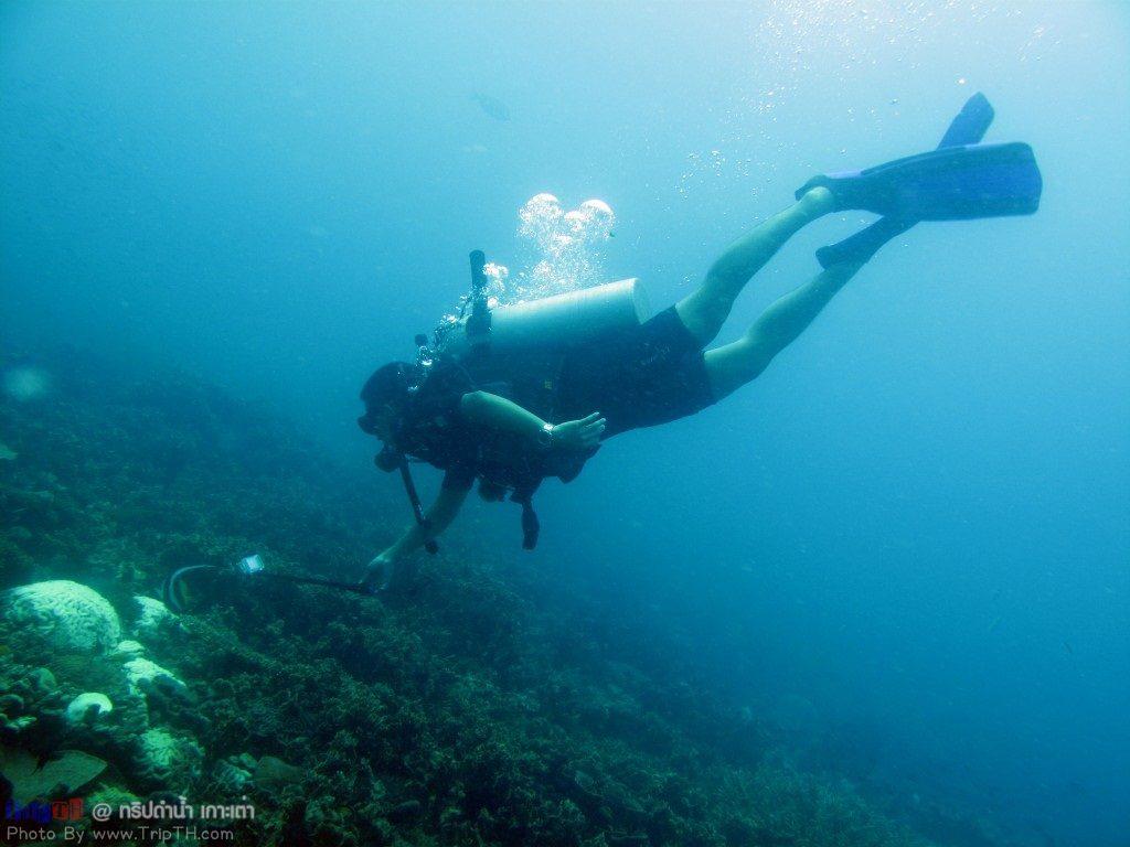 ปะการังสวยๆ @ เกาะเต่า (4)