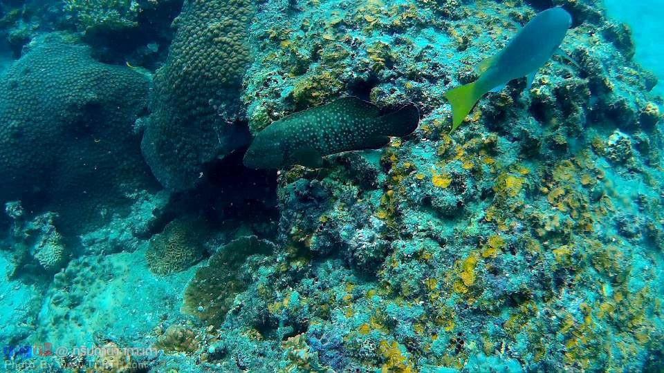 ปะการังเยอะมาก @ เกาะเต่า (5)