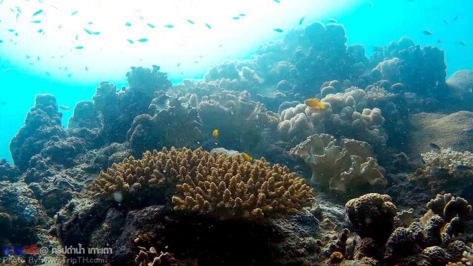 ปะการัง อ่าวลึกเกาะเต่า (5)