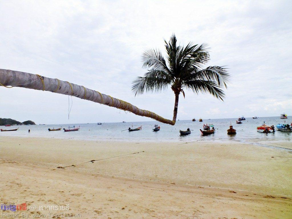หาดทรายรี (3)