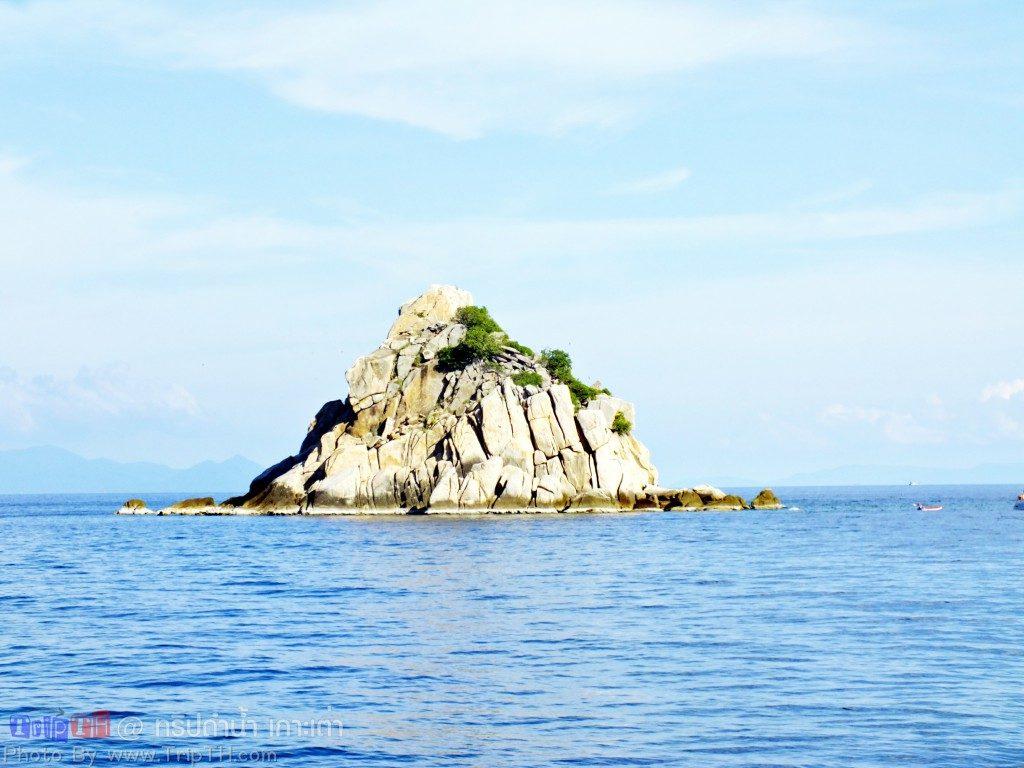 เกาะฉลาม