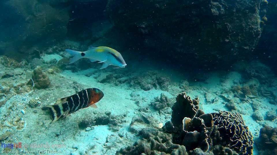 โลกใต้ทะเล อ่าวลึก เกาะเต่า (3)