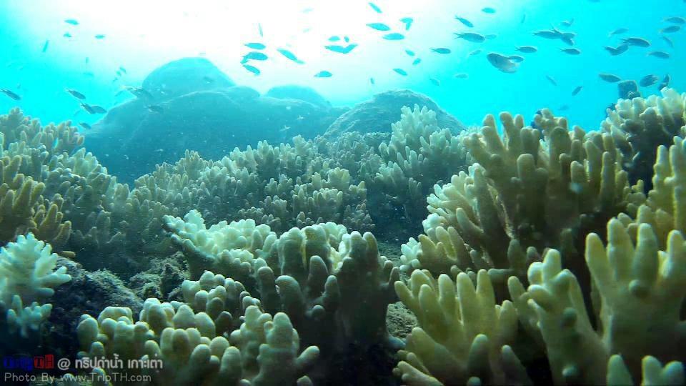โลกใต้ทะเล อ่าวลึก เกาะเต่า (4)