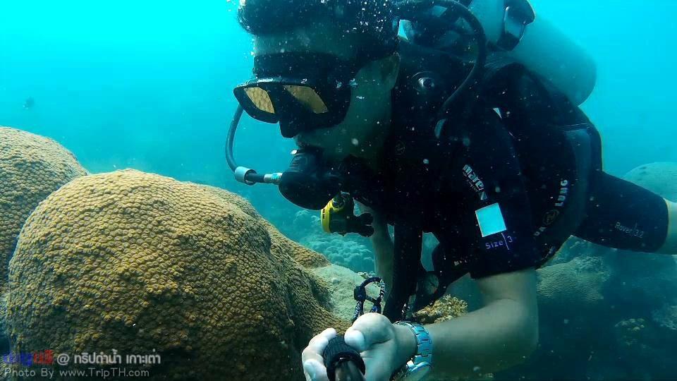 จุดดำน้ำ อ่าวลึก เกาะเต่า (2)