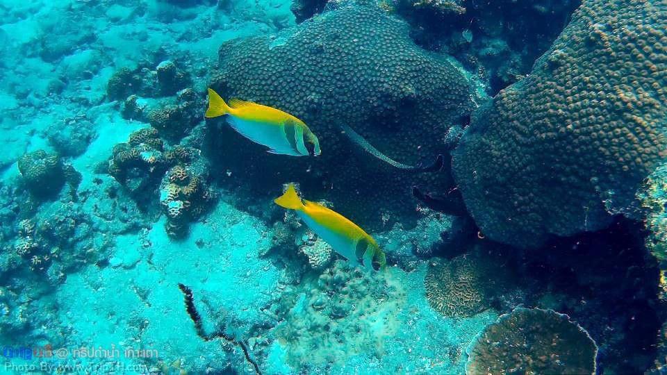 จุดดำน้ำ อ่าวลึก เกาะเต่า (3)