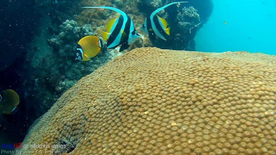 ดำน้ำอ่าวหินงาม เกาะเต่า (1)