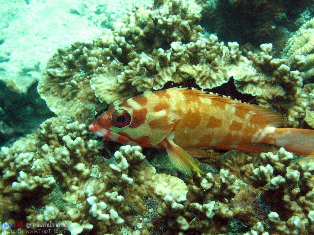 ปลาเยอะมาก @ จุดดำน้ำอ่าวลึก เกาะเต่า (3)