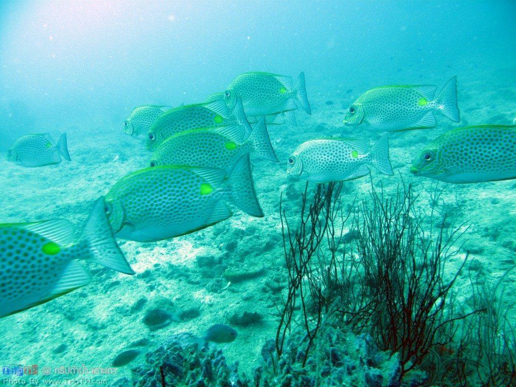 ปลาเยอะมาก @ จุดดำน้ำอ่าวลึก เกาะเต่า (5)