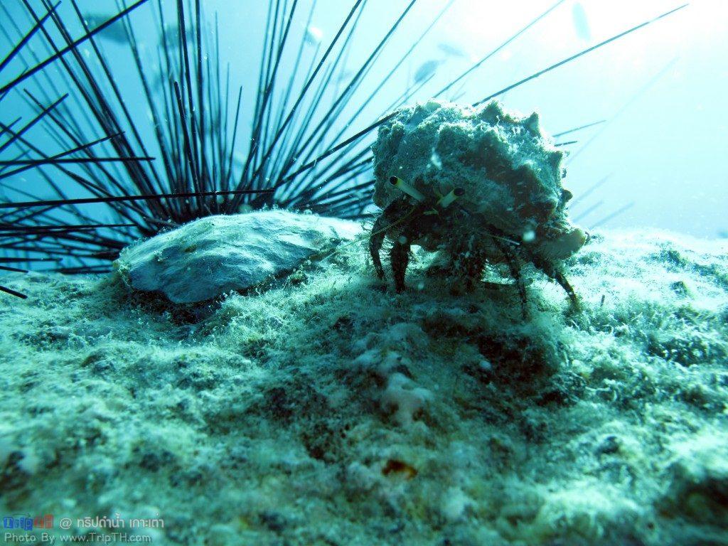 ปะการังสวยๆ @ เกาะเต่า (3)