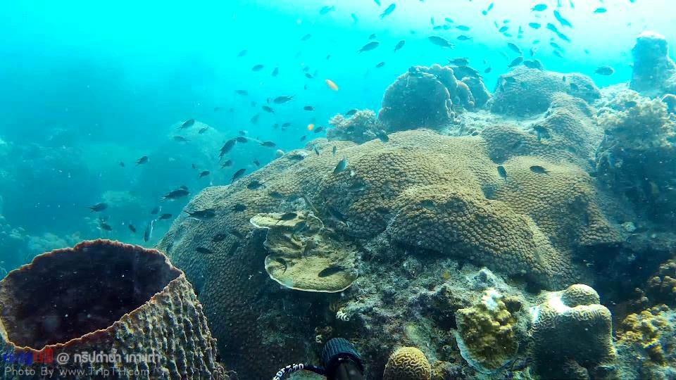 ปะการังเยอะมาก @ เกาะเต่า (1)