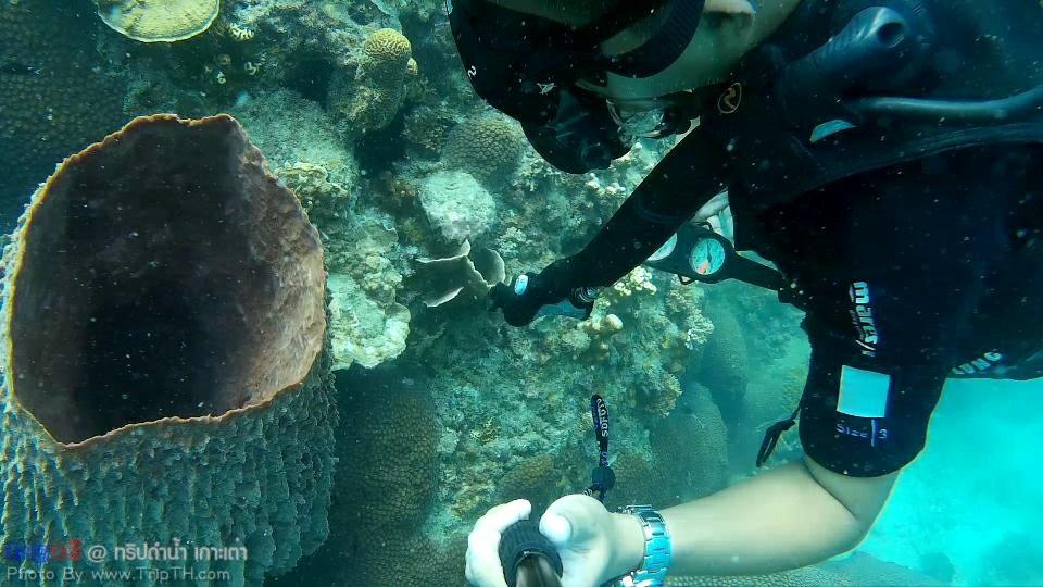 ปะการังเยอะมาก @ เกาะเต่า (2)