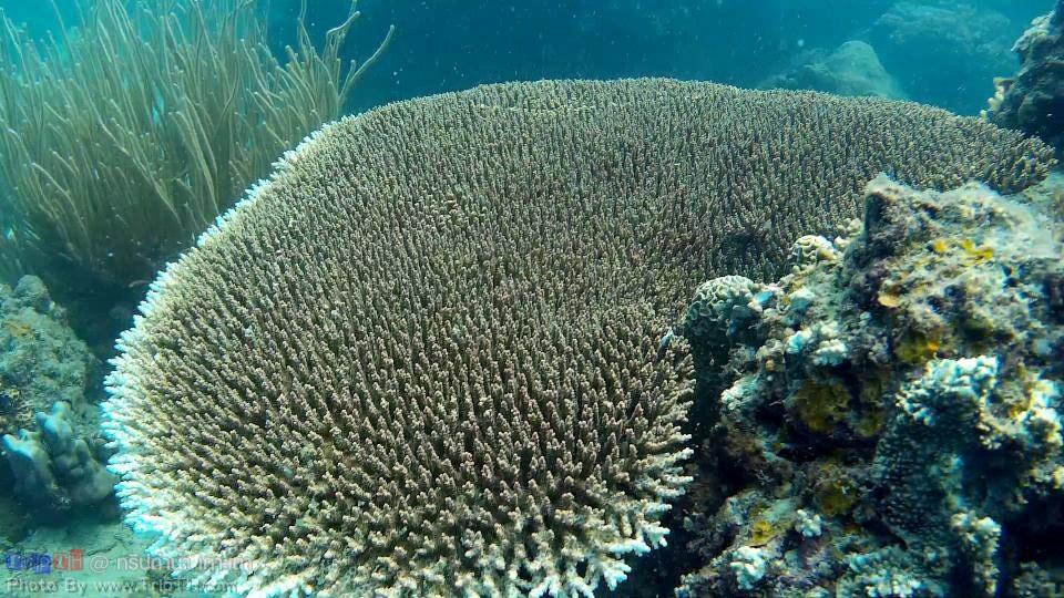ปะการัง อ่าวลึกเกาะเต่า (2)