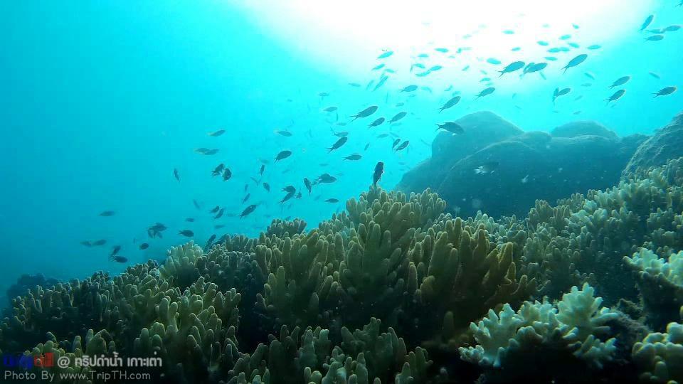 ปะการัง อ่าวลึกเกาะเต่า (3)