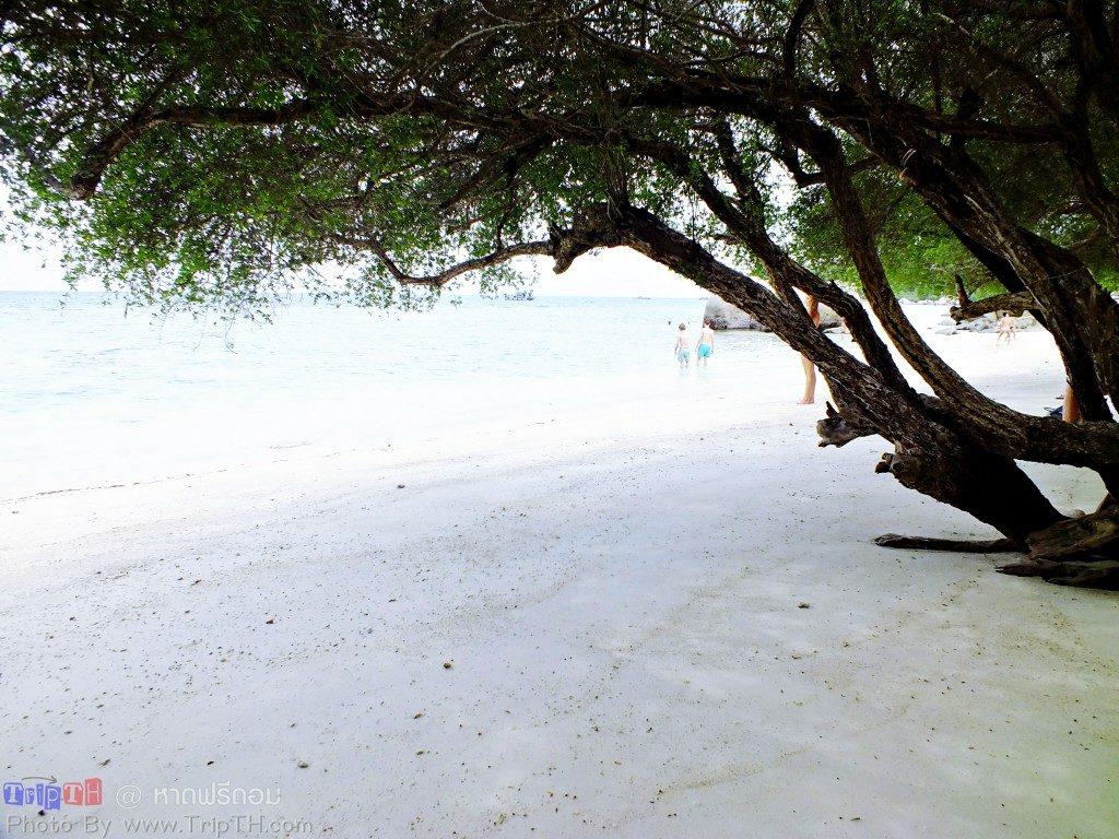 หาดฟรีดอม (2)
