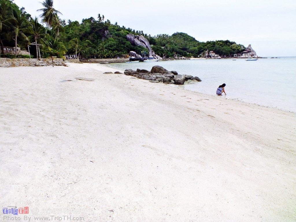เกาะเต่ารีสอร์ท ยามเช้า (5)