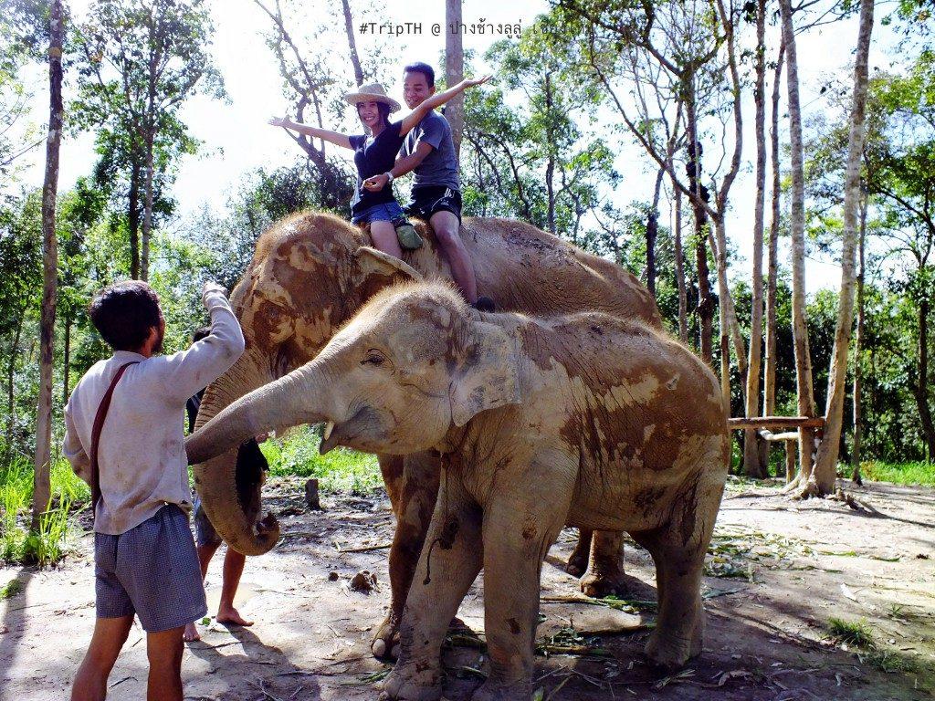 ขี่ช้าง เชียงใหม่ ปางช้างลูลู่ (1)