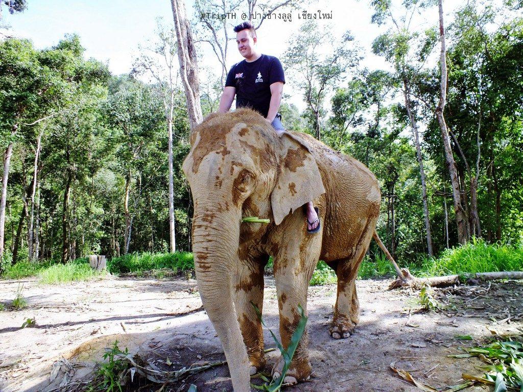 ขี่ช้าง เชียงใหม่ ปางช้างลูลู่