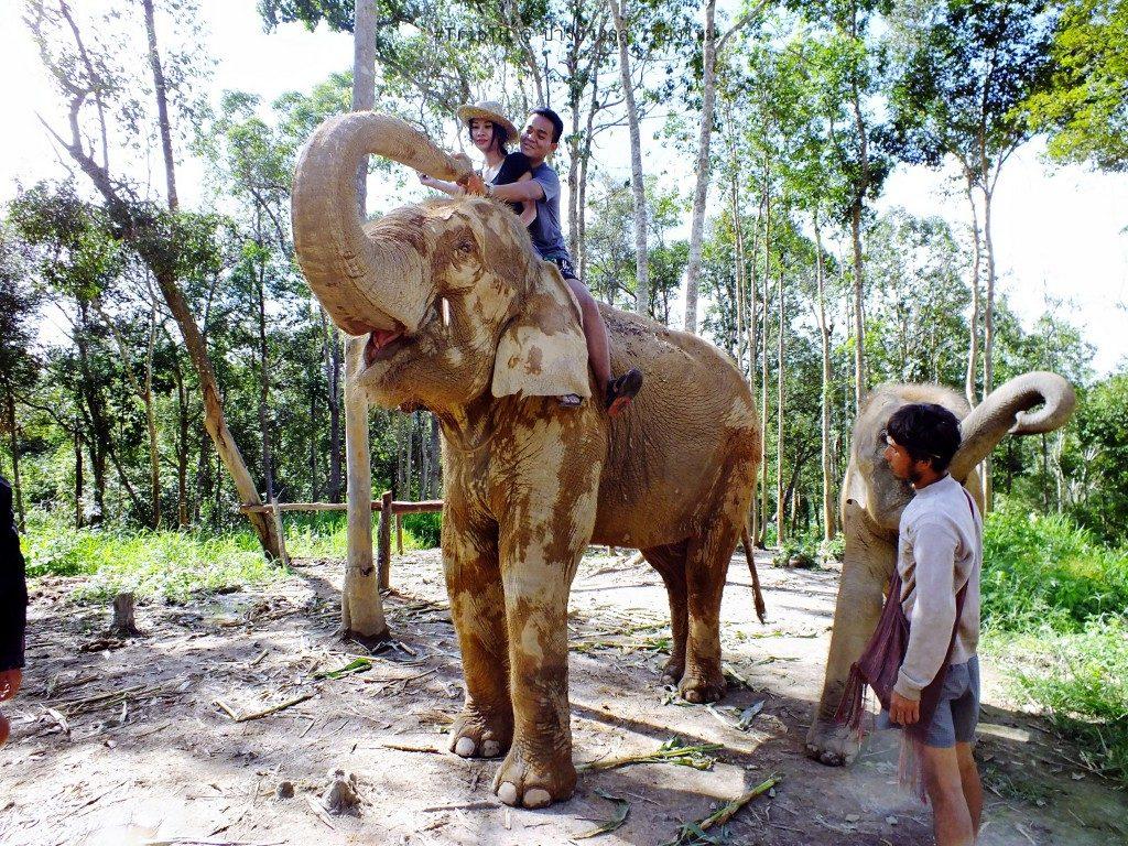 ขี่ช้าง เชียงใหม่ ปางช้างลูลู่ (2)
