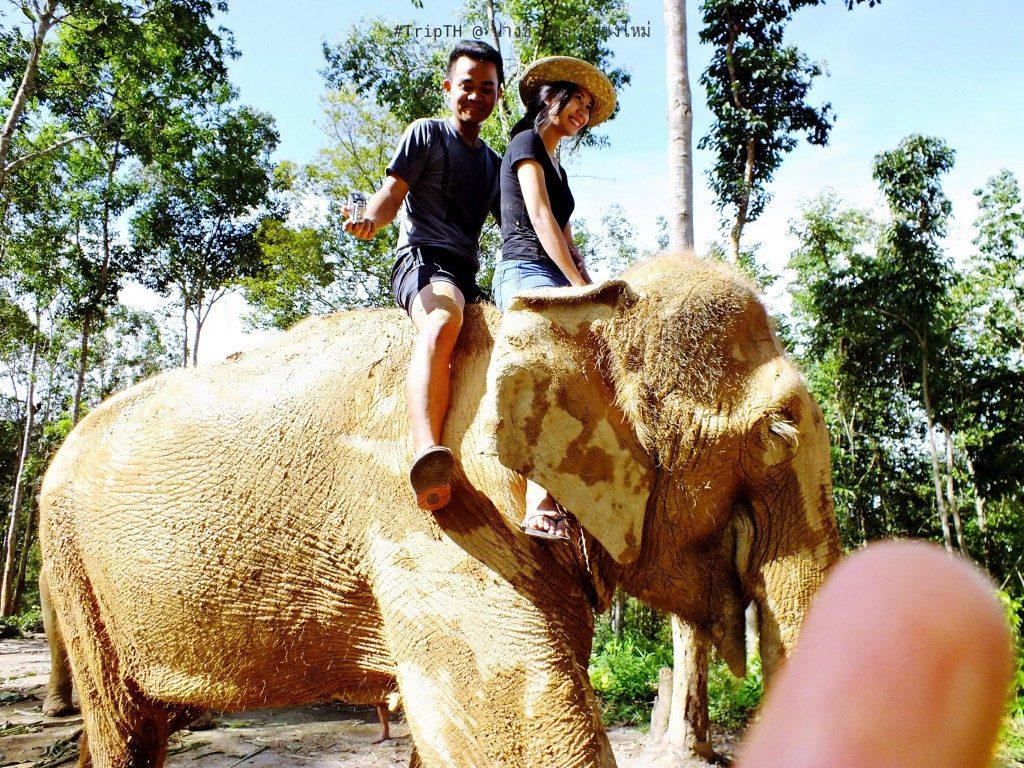 ขี่ช้าง เชียงใหม่ ปางช้างลูลู่ (3)