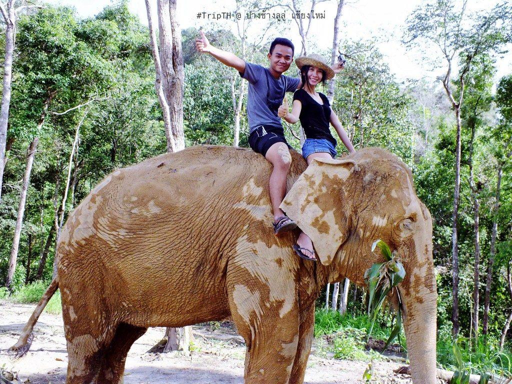 ขี่ช้าง เชียงใหม่ ปางช้างลูลู่ (4)