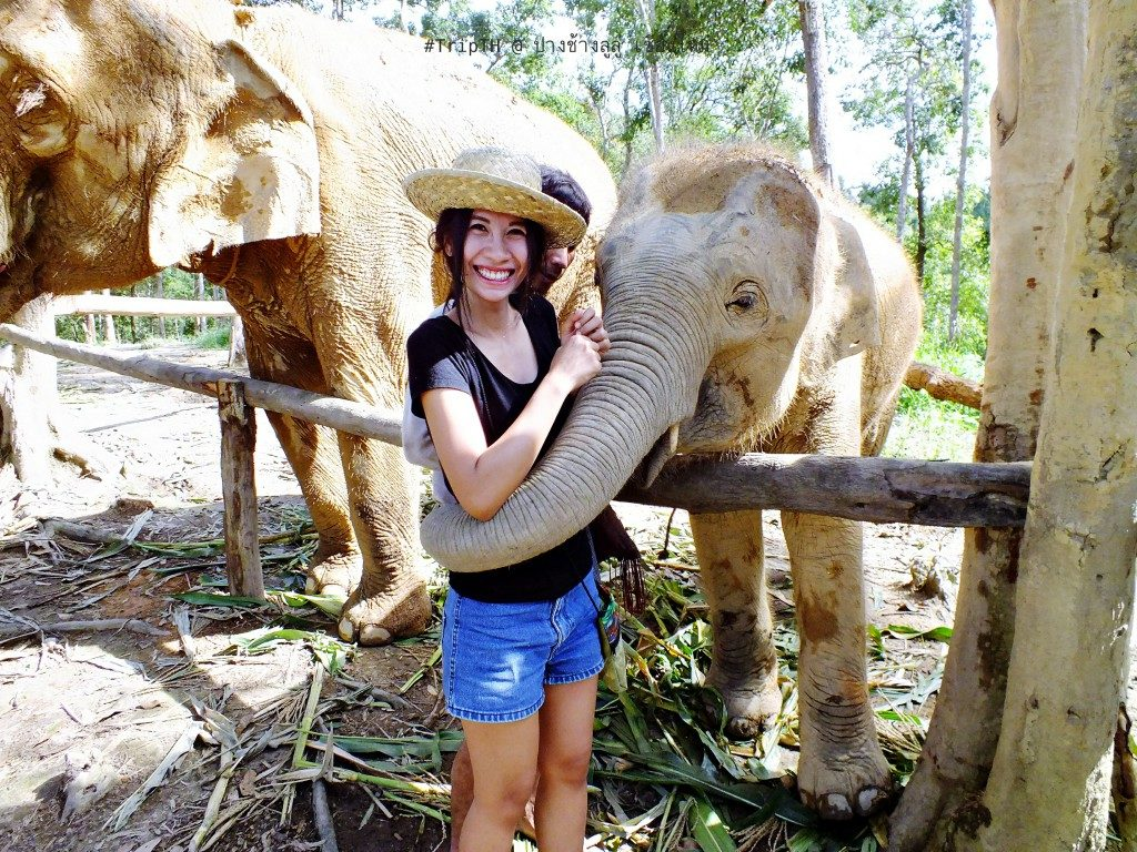 ช้างกอด