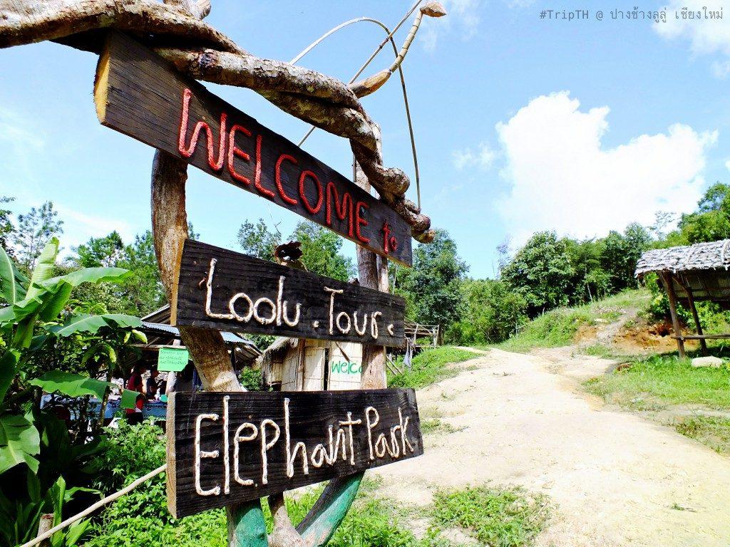 ปางช้างลูลู่