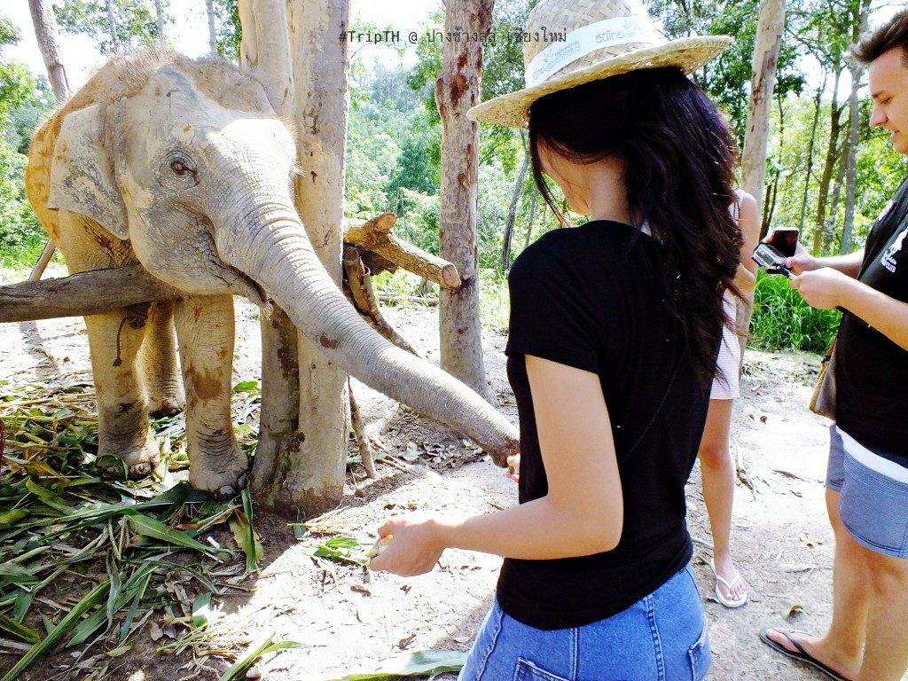 ป้อนอาหารให้ช้าง (2)